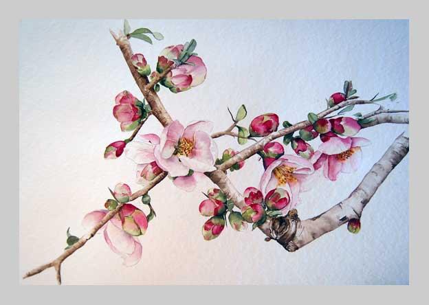 Cerisier du japon - Cerisier en fleur dessin ...